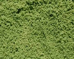 Bristlecone Green Ground Cover