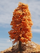 October Orange Deciduous Tree
