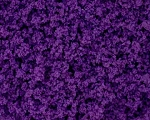 Lilac Ground Cover