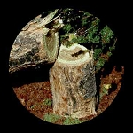 Real Wood Tree Stumps