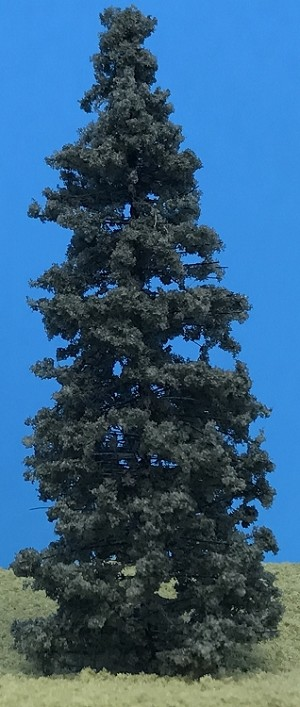 Blue Spruce Standard Pines